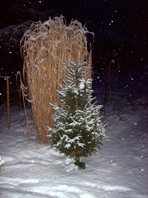 WeihnachtsbaumSchnee